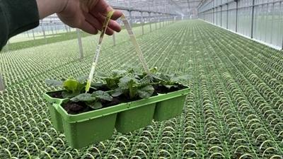 Herbruikbare trays voor iedere kweker - M-plastics